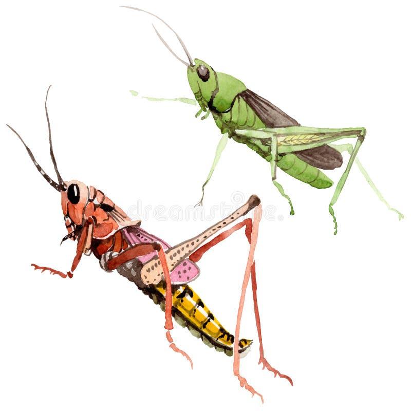 Insecte sauvage de crickets exotiques dans un style d'aquarelle d'isolement illustration libre de droits
