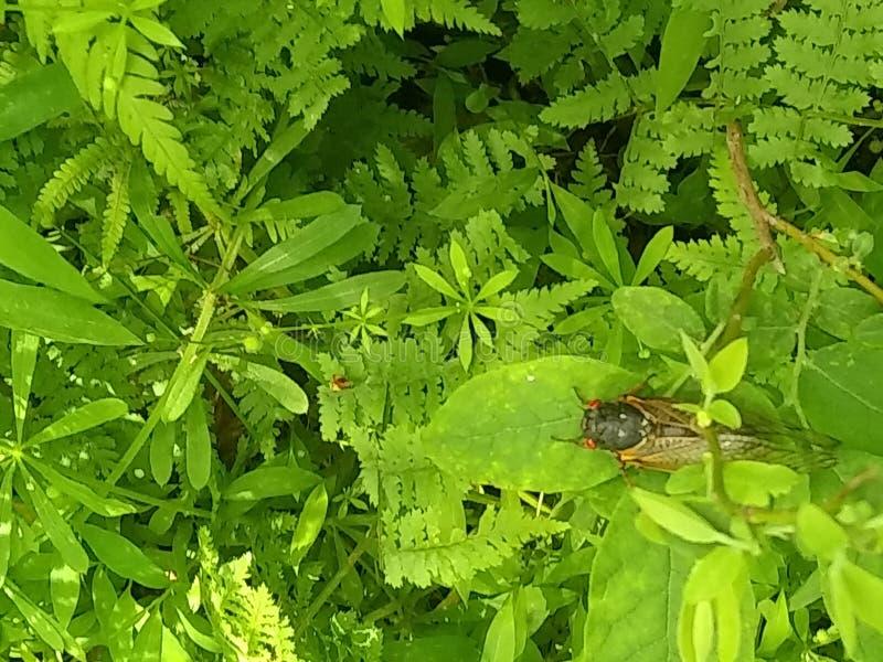 insecte sur l'herbe images stock