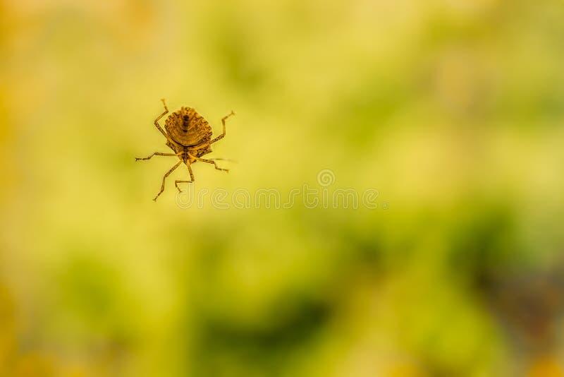 Insecte sur la fenêtre images libres de droits