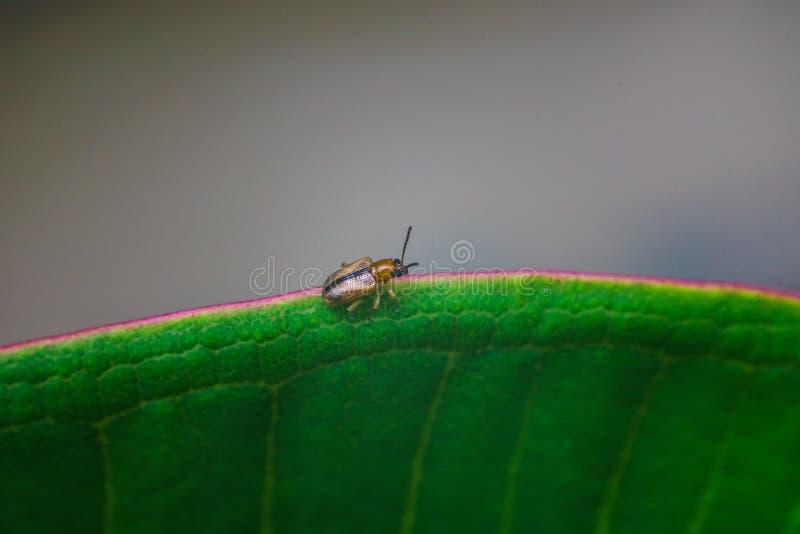 Insecte sur la feuille de jante photographie stock libre de droits