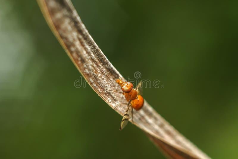 Insecte sur la feuille sèche images stock