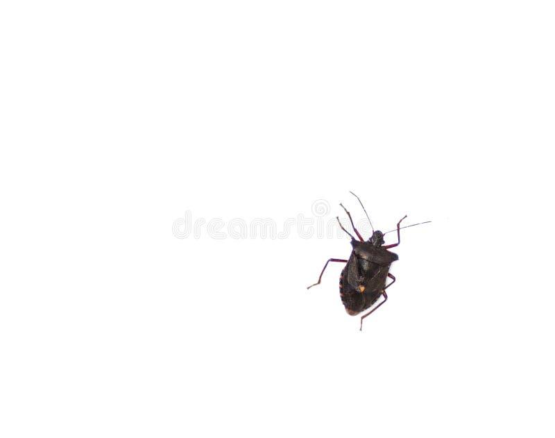 Insecte sur le fond blanc photos libres de droits