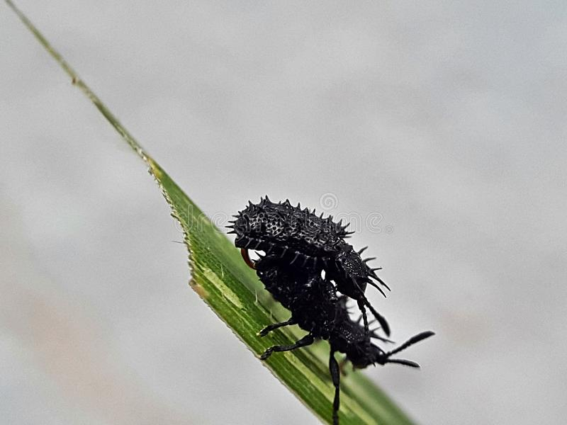 insecten royalty-vrije stock foto