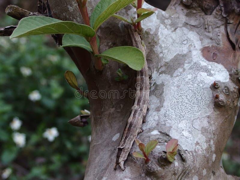 insecten royalty-vrije stock afbeeldingen