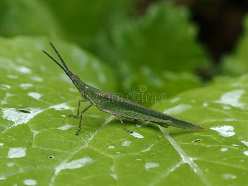 insecten royalty-vrije stock afbeelding