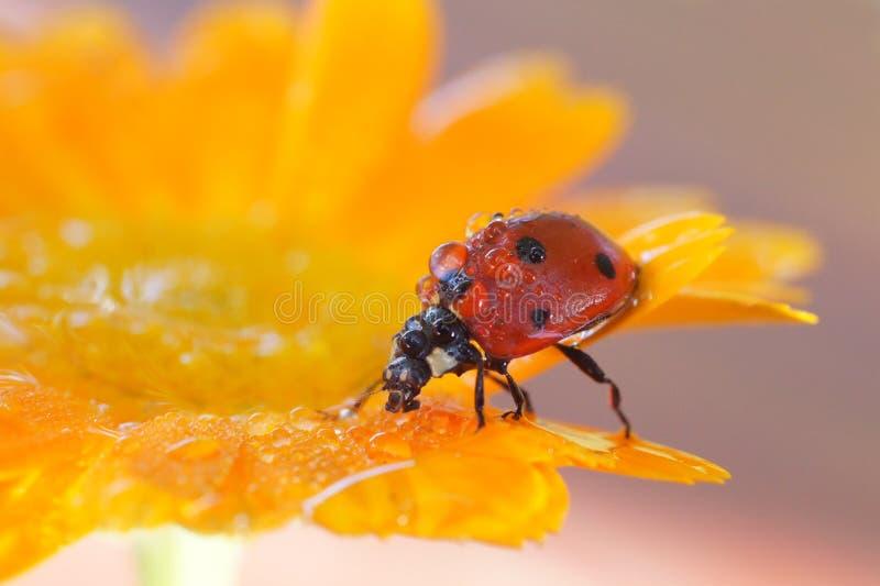 Insecten in de aard stock afbeelding