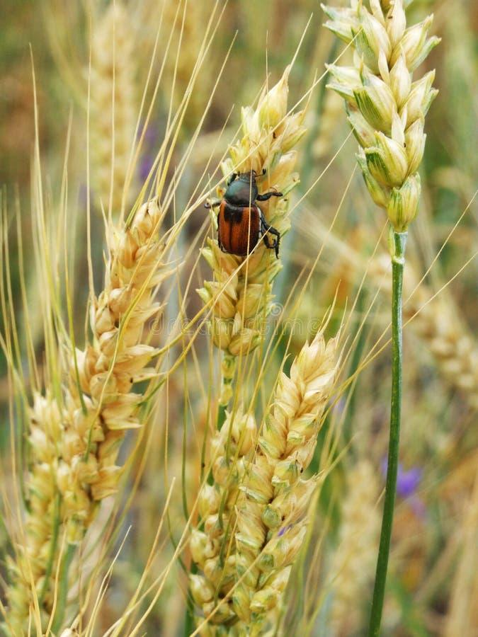 Insecten in de bergen van de Karpaten royalty-vrije stock foto's