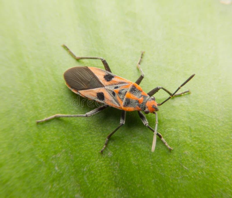 Insecten en Insecten stock afbeelding