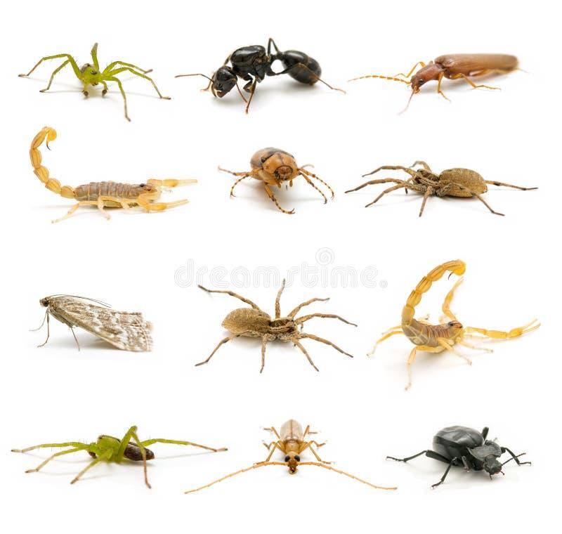 Insecten en spinachtigen stock afbeeldingen