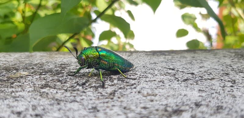 Insecten in het bos stock foto