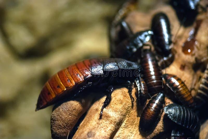Insecten, kakkerlakken royalty-vrije stock afbeeldingen