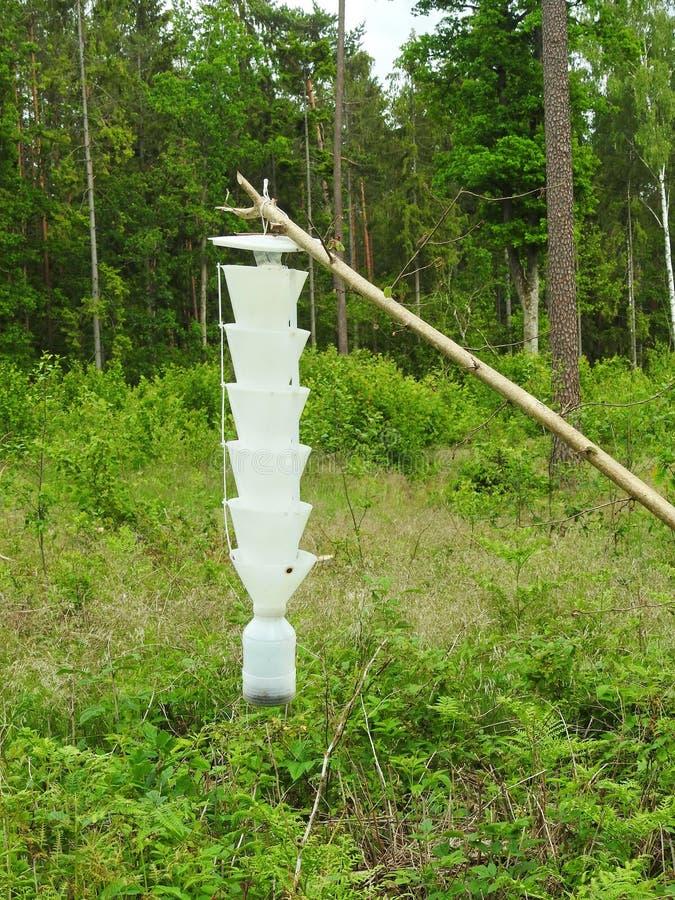 Insectenvanger in bos stock fotografie
