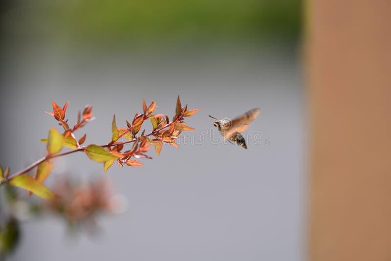 Insectenvlucht zoals een dans in tak royalty-vrije stock afbeeldingen