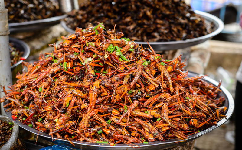 Insectenvoedsel in Kambodja stock afbeeldingen
