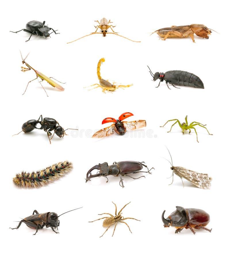 Insectes image libre de droits