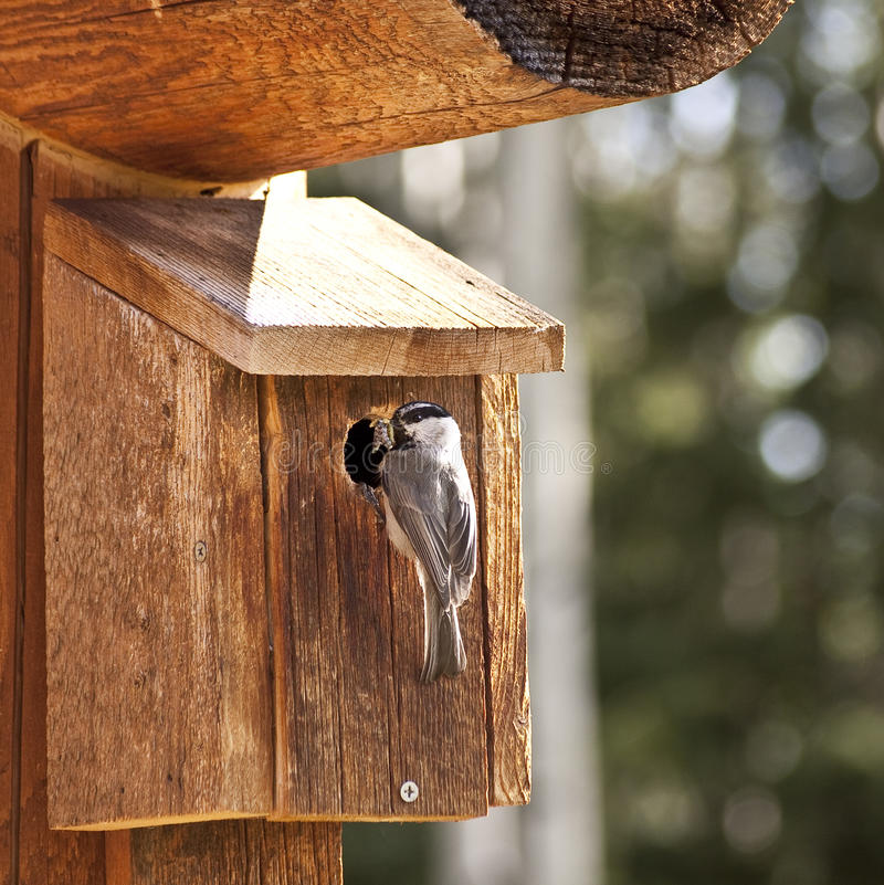 Insectes alimentants d'oiseau photo libre de droits