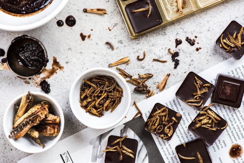 Insectes comestibles faits maison avec du chocolat image libre de droits