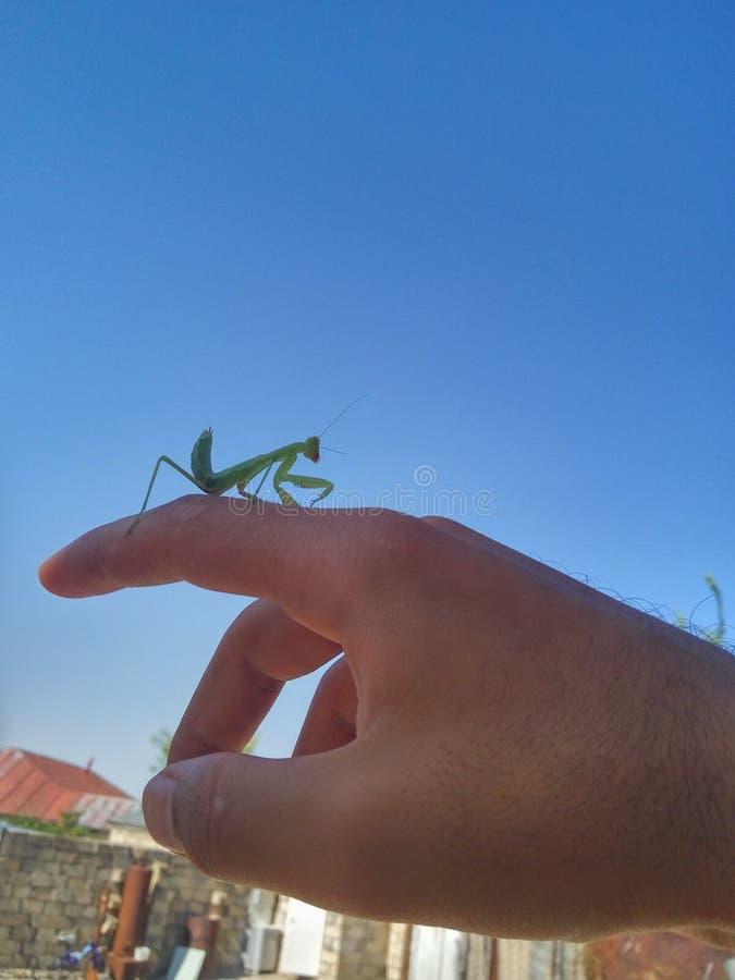 Insectes dans la main images stock