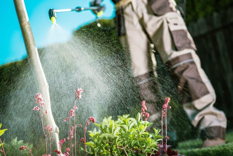 Insectes de combat dans le jardin image libre de droits