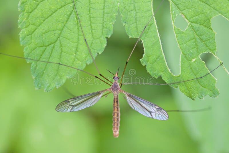 insectes de Moustique-lumière sur l'herbe photo stock