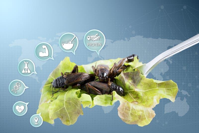 Insectes de nourriture : L'insecte de crickets ont fait frire et les m?dias de nutrition d'ic?ne pour manger comme produits alime illustration libre de droits