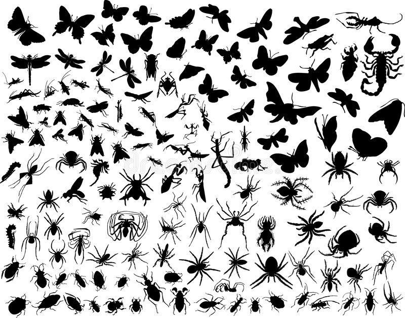 Insectes de vecteur illustration stock