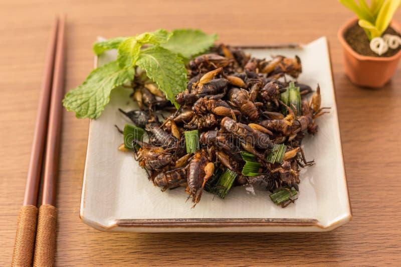 Insectes frits image stock