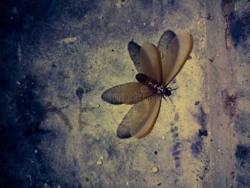 Insectes la nuit image stock