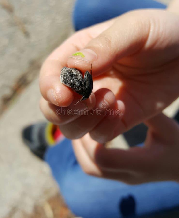 Insectes les explorant d'enfant images stock