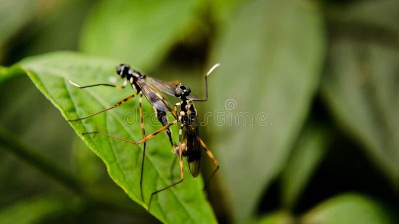 Insectes sur une feuille image stock