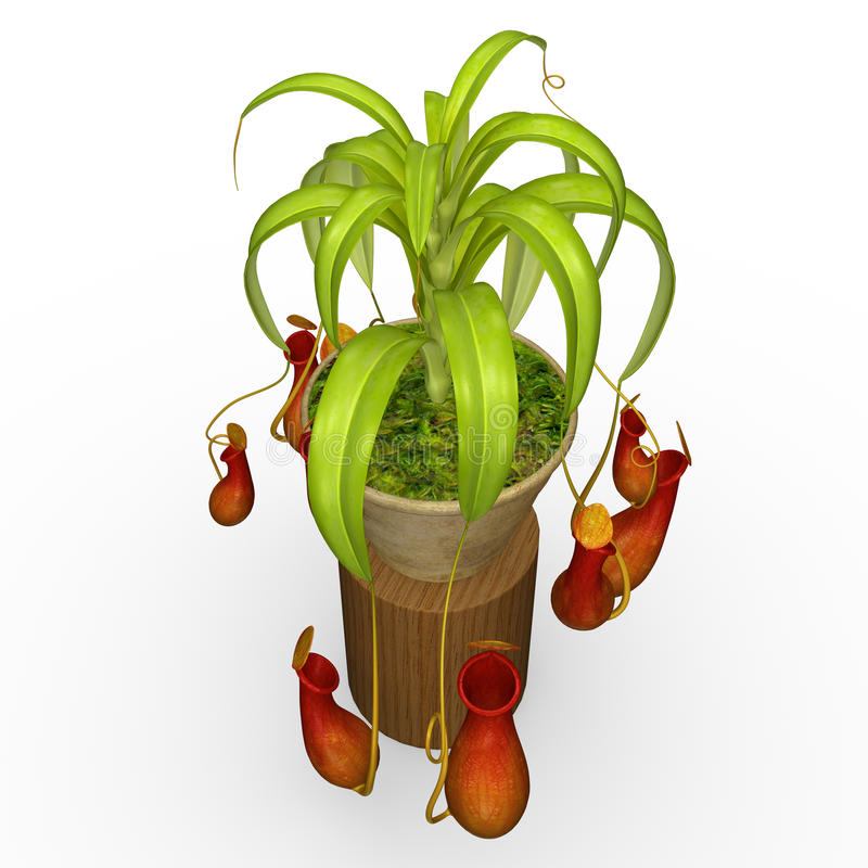 Insectivorous plants vector illustration