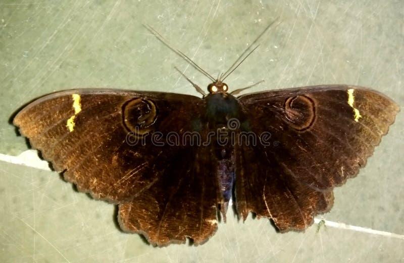 Insectliefde royalty-vrije stock fotografie