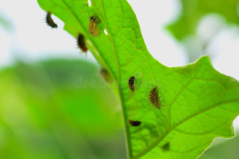 insecto imágenes de archivo libres de regalías