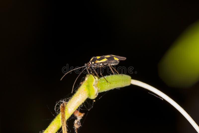 Insecto amarillo-negro extraño fotografía de archivo
