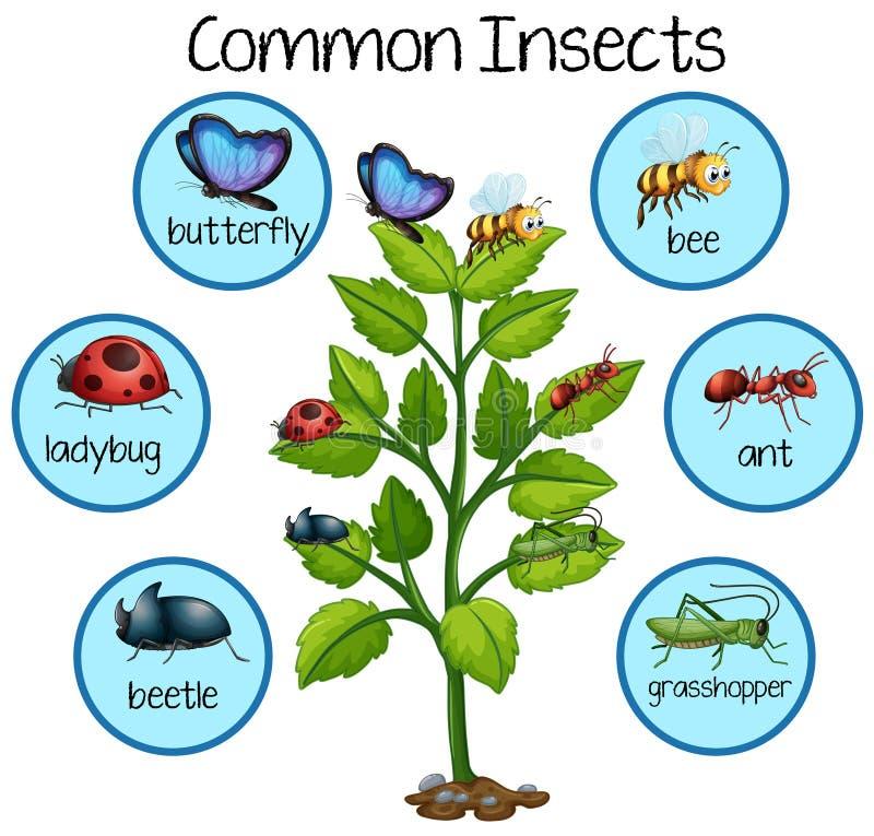 Insecto común en la planta ilustración del vector