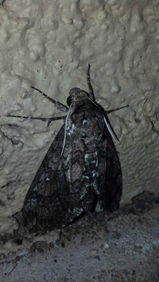 Insecto con errores imágenes de archivo libres de regalías