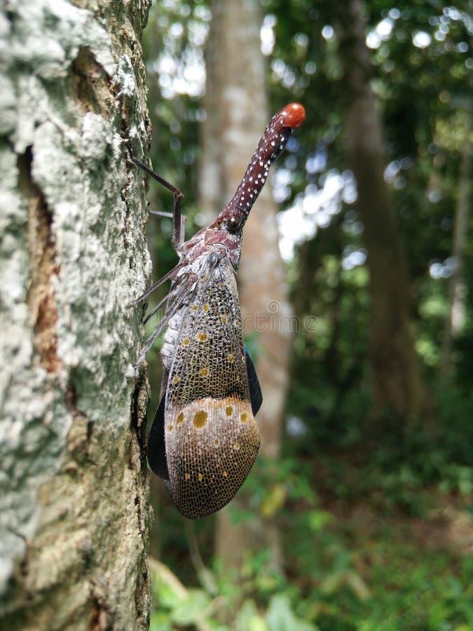 Insecto de la linterna fotografía de archivo libre de regalías