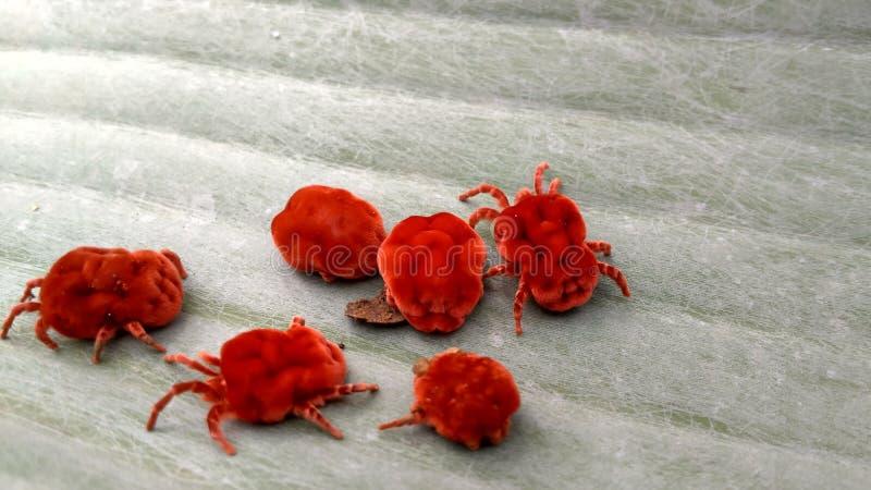Insecto de la lluvia imágenes de archivo libres de regalías