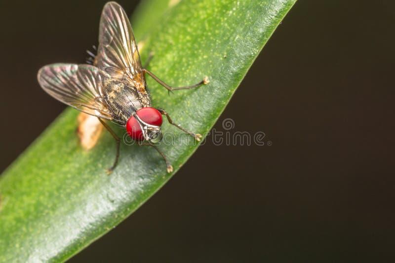 Insecto de la mosca imagen de archivo