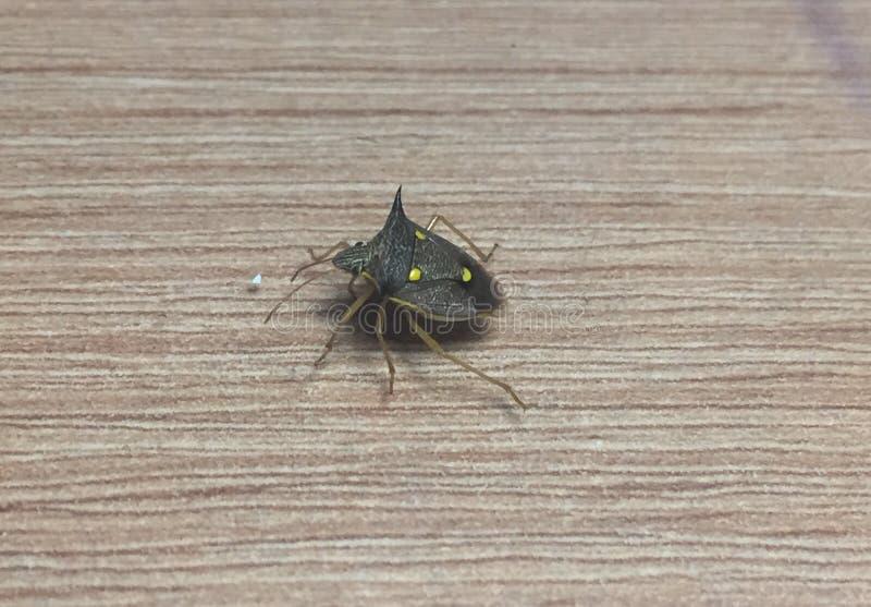 Insecto de la noche fotografía de archivo