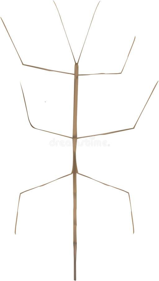 Insecto de palillo libre illustration
