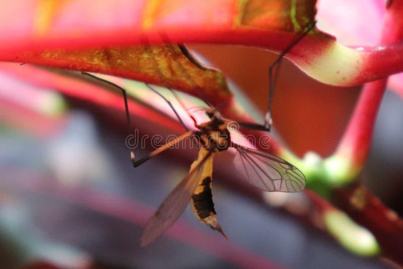 Insecto de picadura, haciendo estallar debajo de las hojas, el salvaje imagen de archivo libre de regalías
