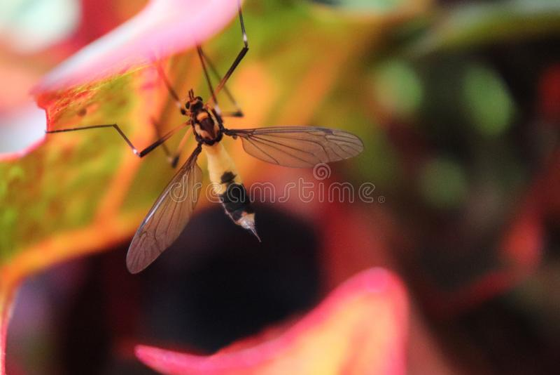 Insecto de picadura, haciendo estallar debajo de las hojas, el salvaje imágenes de archivo libres de regalías