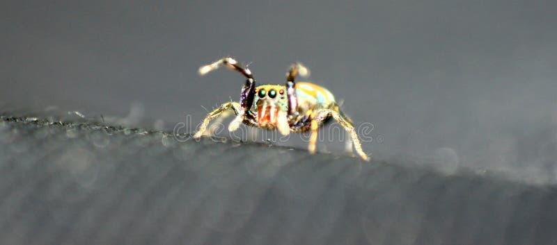 Insecto del color imagen de archivo libre de regalías