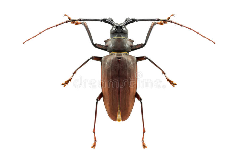 Insecto del insecto aislado imagenes de archivo