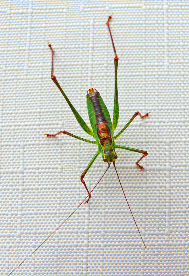 Insecto del verano imagenes de archivo