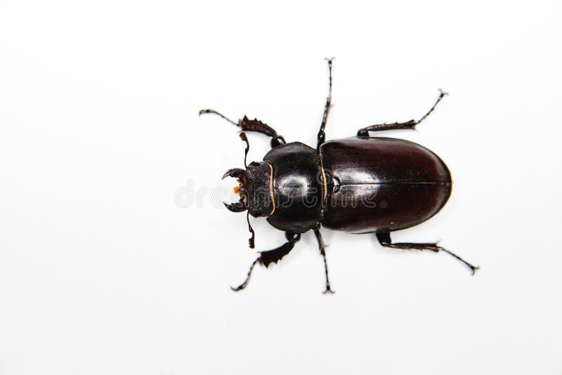 Insecto en el fondo blanco - seis piernas fotos de archivo