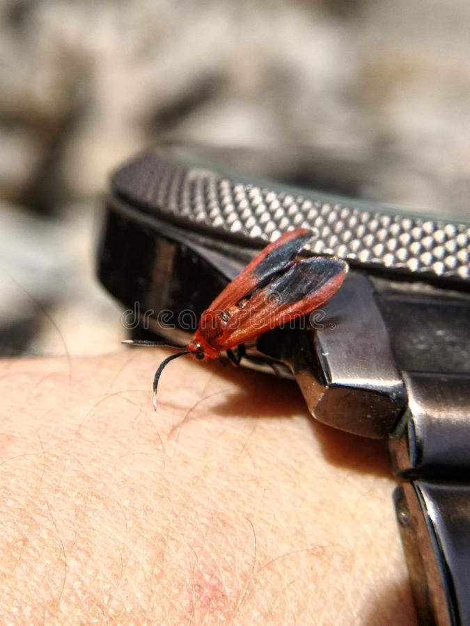 Insecto en el reloj imágenes de archivo libres de regalías