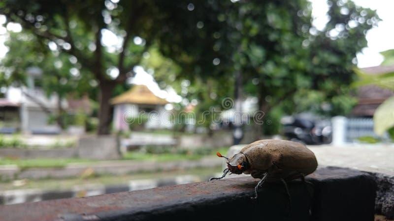 Insecto en insecto de la sección imagen de archivo