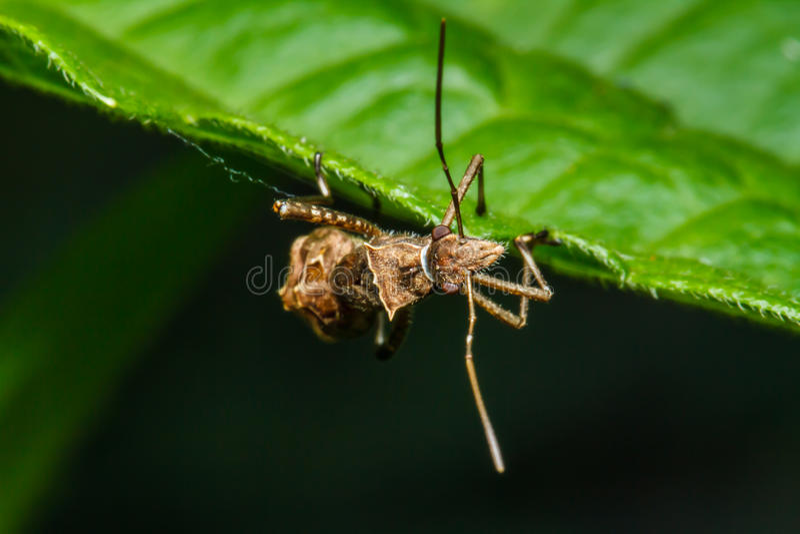 Download Insecto en la hierba verde foto de archivo. Imagen de fauna - 42427154